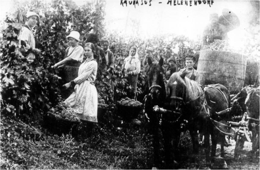 Кавказские немцы: в поисках рая фото 1