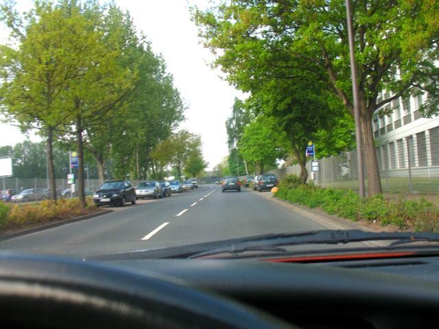 дорога и деревья фото