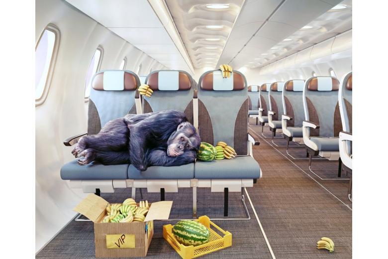 В Европе предлагают спальные места в багажном отделении самолета фото 1