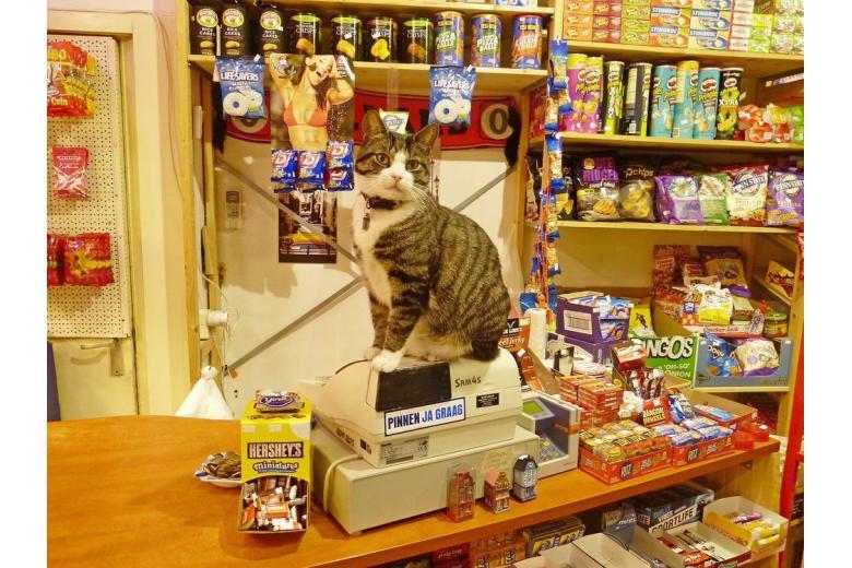 В Германии хотят ввести налог на кошек фото 1