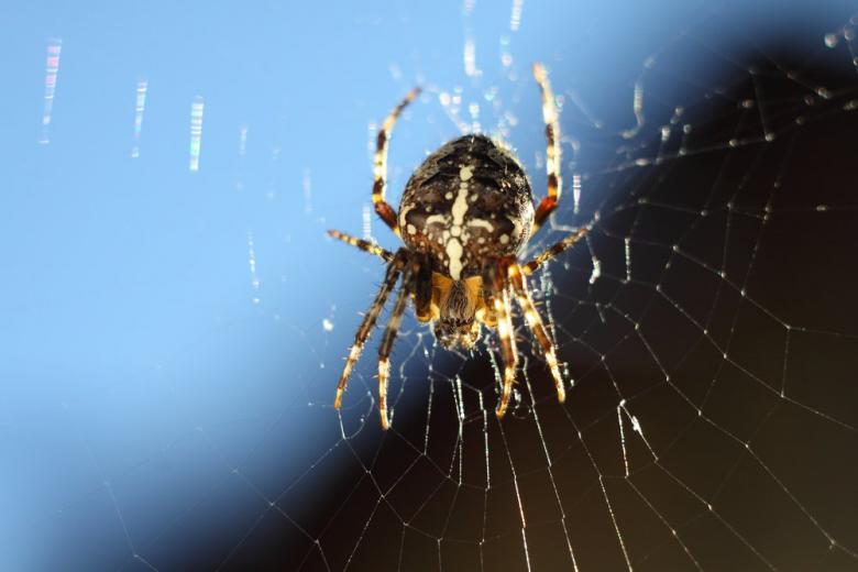 В немецком супермаркете поднялась паника из-за ядовитых пауков фото 1