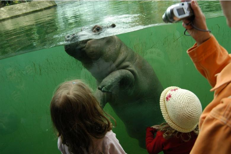Краткая история немецких зоопарков фото 1