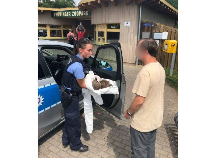 Немецкая полиция спасла пьяных ежей (+фото) фото 2