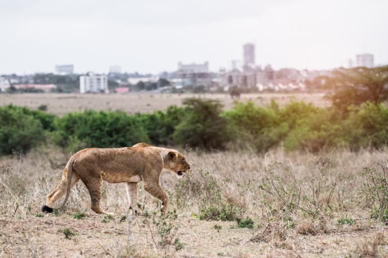 Дикая опасность: в Рейнланд-Пфальце из зоопарка сбежали львы и тигры фото 1