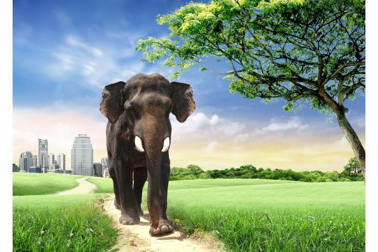 Слон, сбежавший из цирка, напугал жителей немецкого городка (+ видео) фото 1