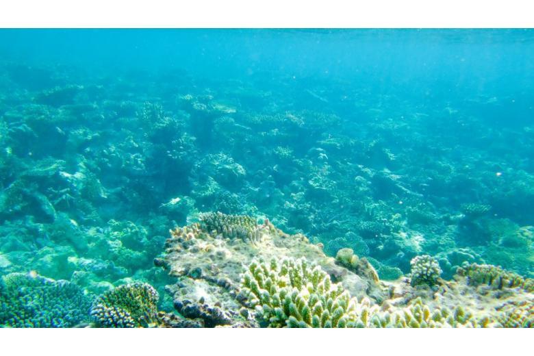 Отец современной океанографии удостоен награды Межправительственной океанографической комиссии ЮНЕСКО фото 1