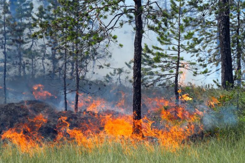 В Германии объявлен сезон повышенной опасности пожаров фото 1