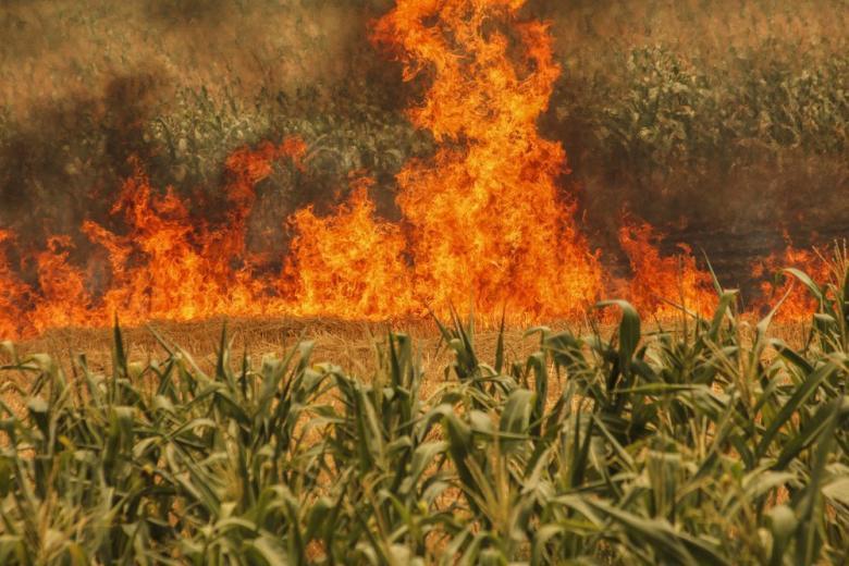 Птица устроила масштабный пожар в Ростоке фото 1