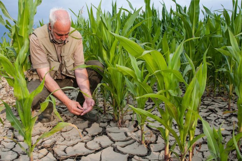 Фермеры и засуха в Германии