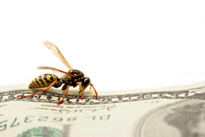 65 тысяч евро за осу: штрафы за убийство насекомых в Германии фото 1