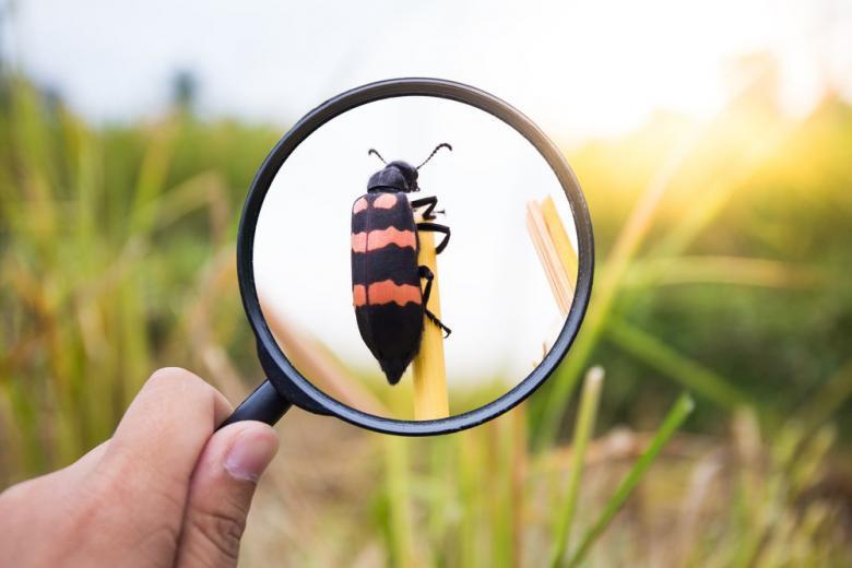«Перепись насекомых» в Германии: к подсчету могут присоединиться все желающие фото 1