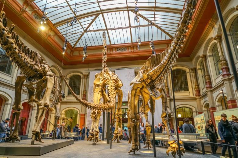 Музей естествознания в Берлине