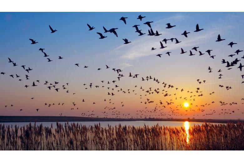 На севере Германии стартовал фестиваль для любителей наблюдать за природой фото 1