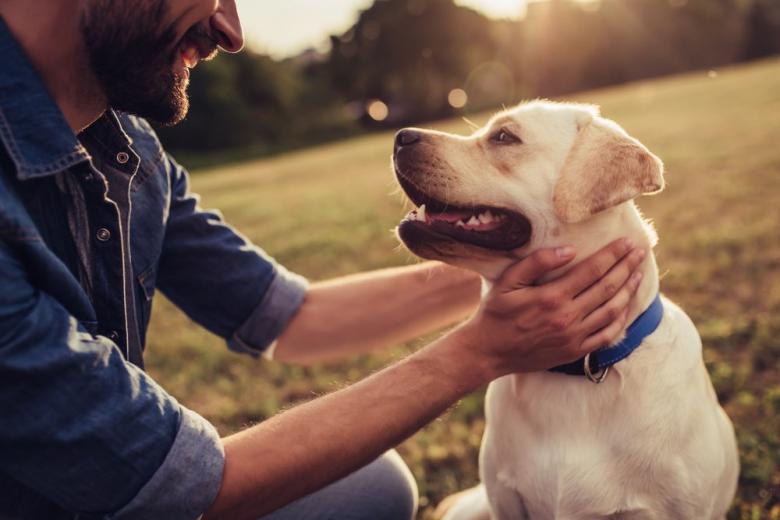 Жителям Берлина на заметку: новые правила для владельцев собак фото 1