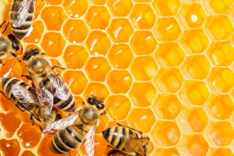 Немцы – мировые чемпионы по потреблению мёда фото 1