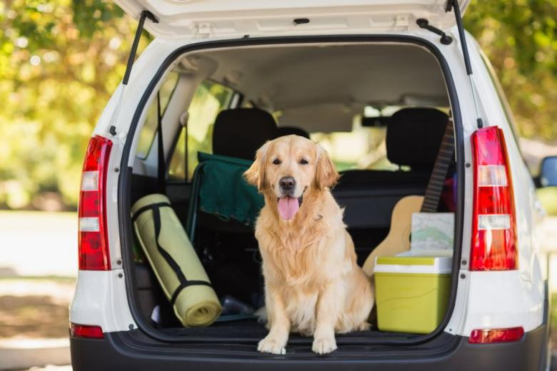 Что нужно знать о перевозке собаки в автомобиле фото 1