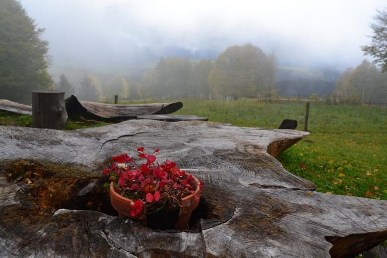 Шварцвальд – таинственный «Черный лес» Германии фото 3