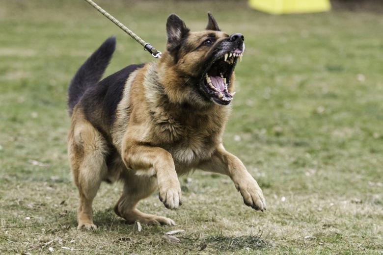 Житель Магдебурга натравил собак на беженцев фото 1