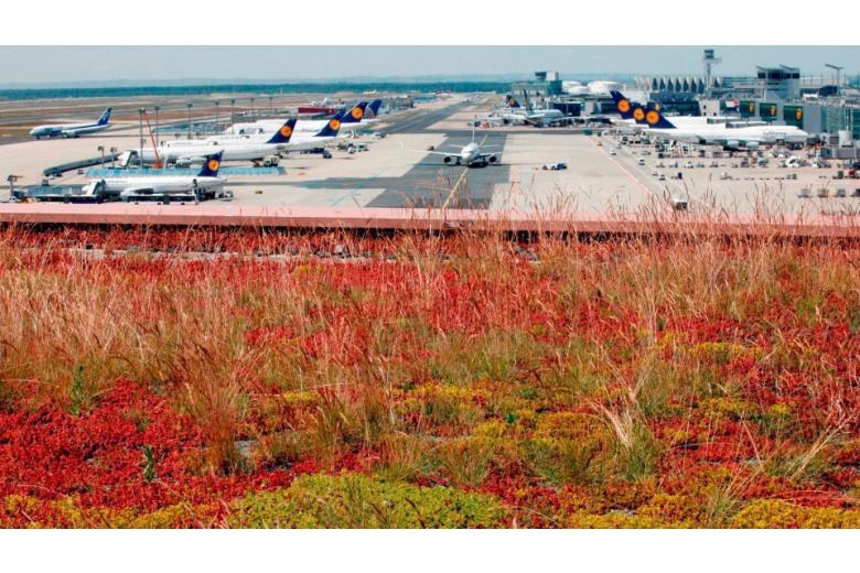 Аэропорт Франкфурта назвали самым полезным для здоровья в мире фото 1