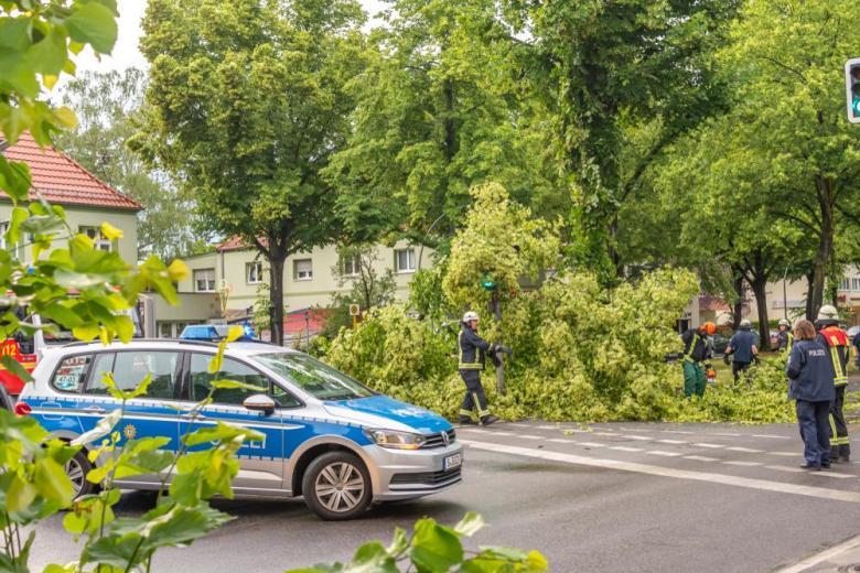 шторм деревья полиция