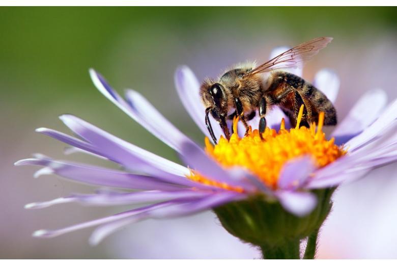 Немецкое правительство защитило насекомых и животных фото 1
