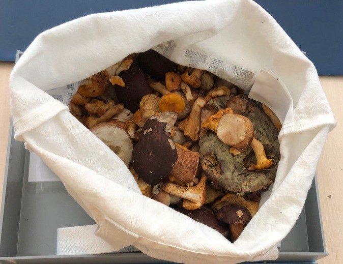 Pilze in einer Tasche