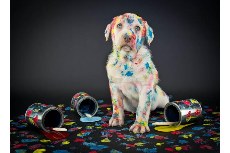 В Германии родился щенок с редким зеленым мехом фото 1
