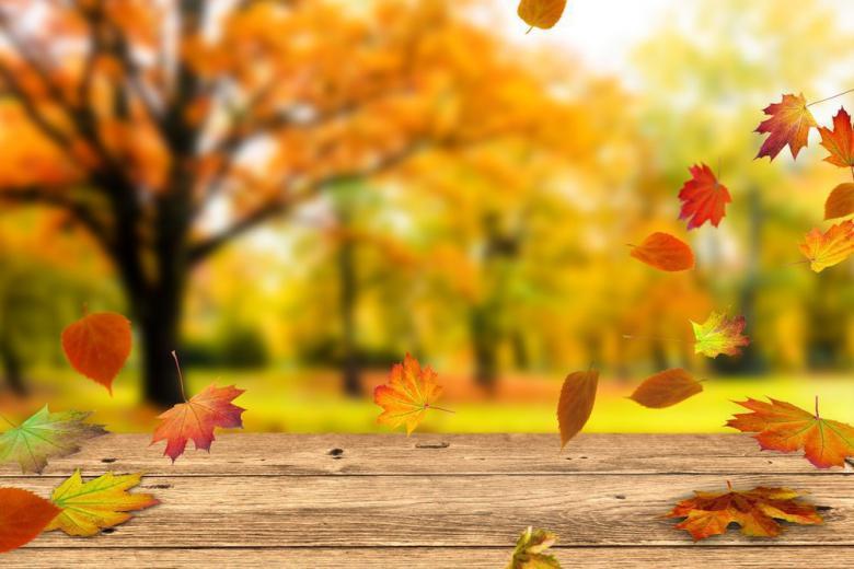 Осень желтые листья