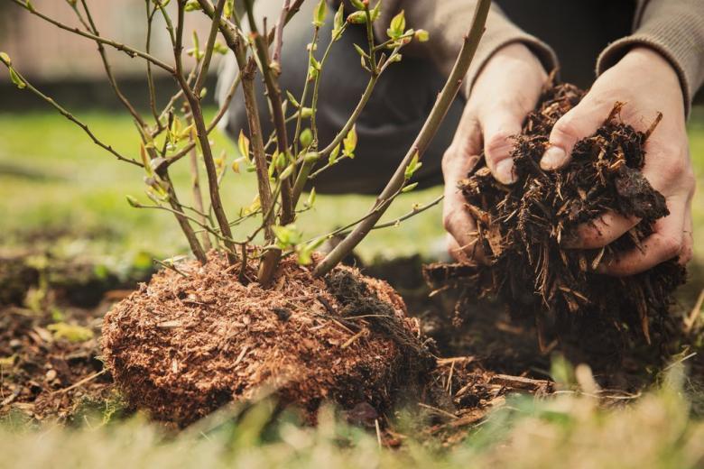 сажают дерево