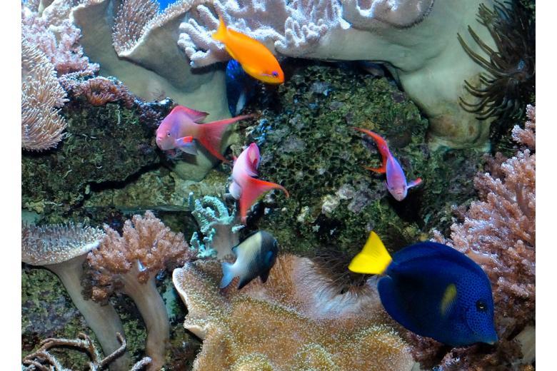 Aquarium in Cologne Zoo