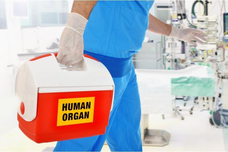 Трансплантация органов в Германии: что нужно знать всем? фото 1