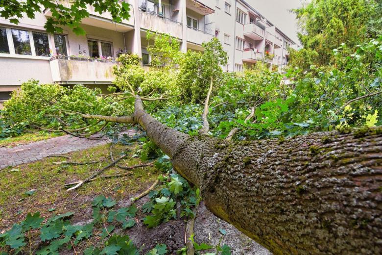 SOS! Непогода в Германии: в школах отменили занятия, а метеорологи предупреждают об опасности фото 1