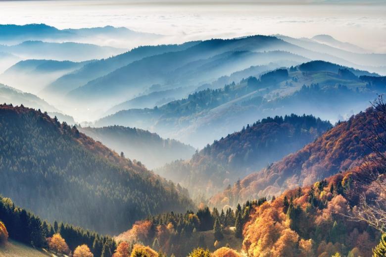 Леса в Германии: состав лесов, острые проблемы фото 1