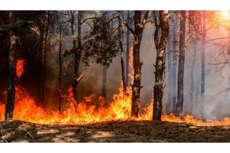 Пожары в лесу становятся реальной угрозой фото