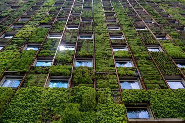 Стена здания, покрытая зелеными растениями фото