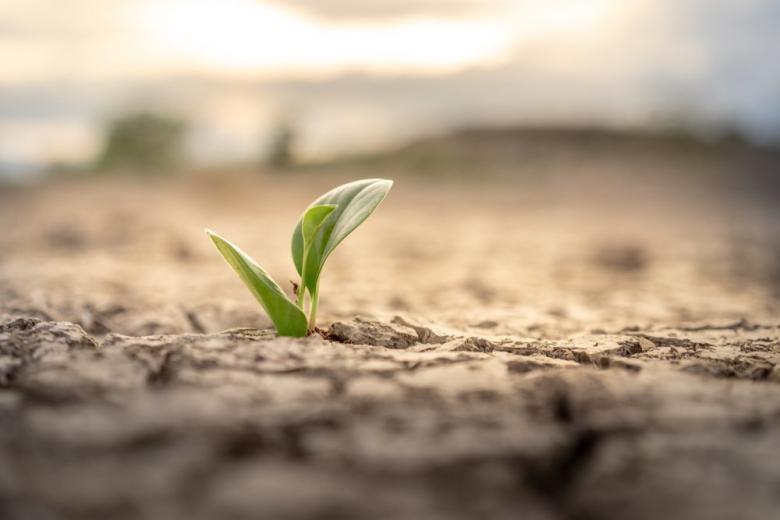 Биологическая весна началась на 2 недели раньше в сухой почве фото