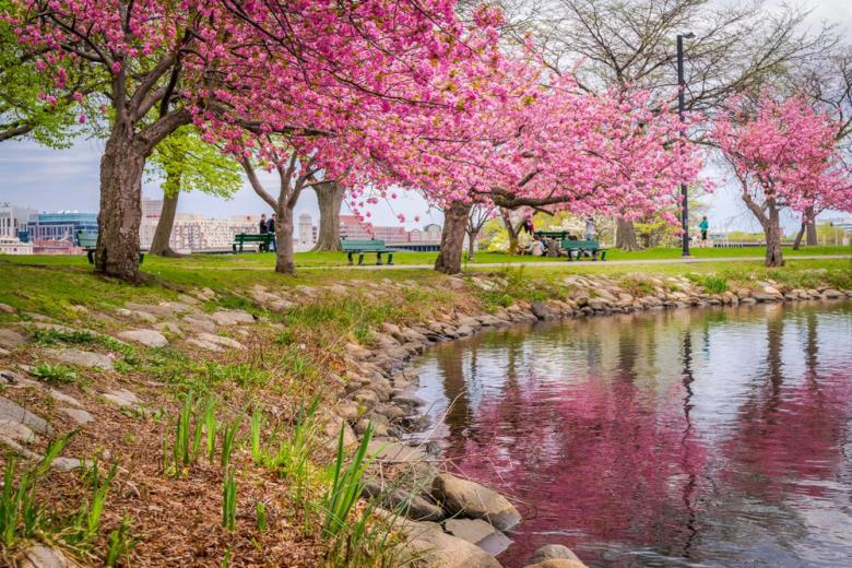 Цветение деревьев в мае фото