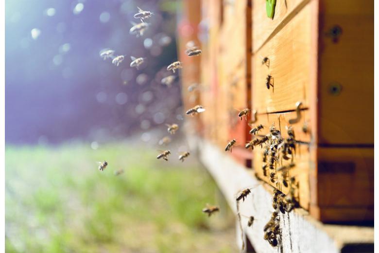 защита пчёл фото