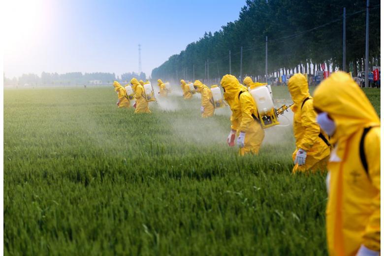 Обрабатываемые пестицидами поля загрязняют овощи и фрукты фото