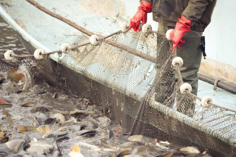 Сети полные рыбы фото