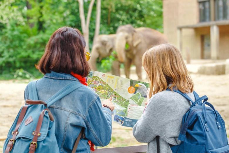 слоны в зоопарке фото