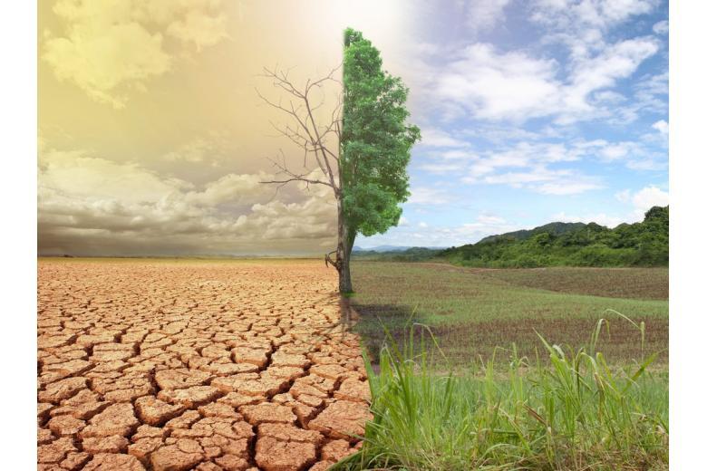 засуха на поле