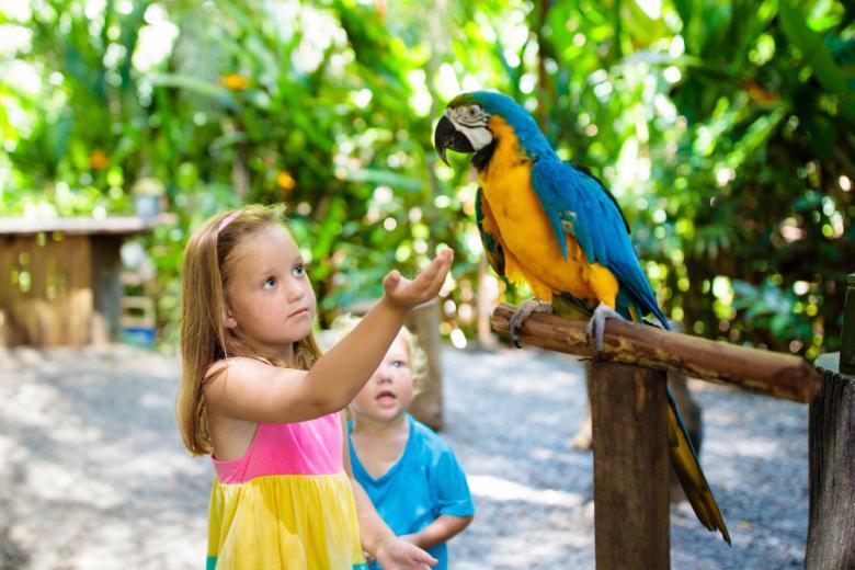 Дети и попугай в зоопарке фото