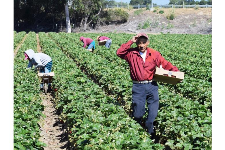 сезонные работники на поле фото