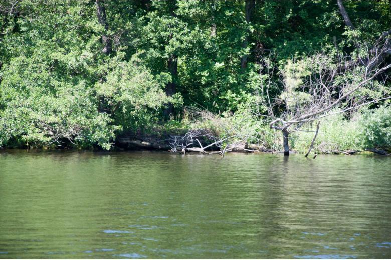 озеро с зелёными деревьями вокруг фото