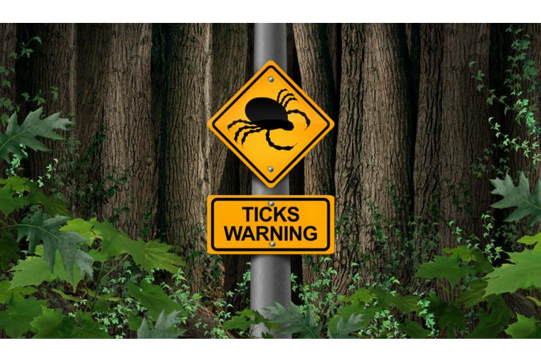 Знак предупреждения о клещах в лесу фото