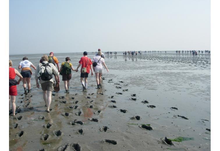 Экскурсия на Ваттовое море фото