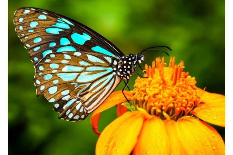 Голубая бабочка на цветке фото