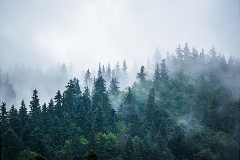 Леса требуют новых решений для спасения фото