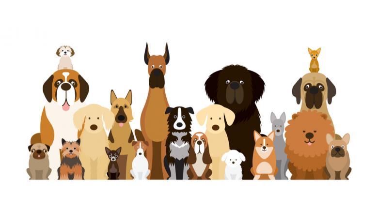Разные породы собак фото